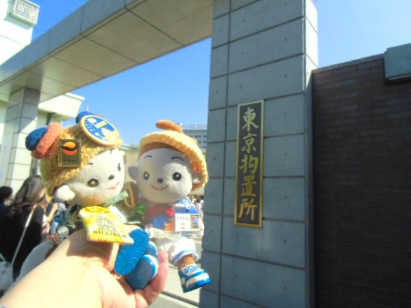 プリモプエルファンに有名な神ちゃんさんからミニくたプープの洞爺君とミニくたプエルのプチマロン君のお写真をいただきました